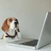 Data Science Community Rocked by Pet Adoption Contest Cheating Scandal